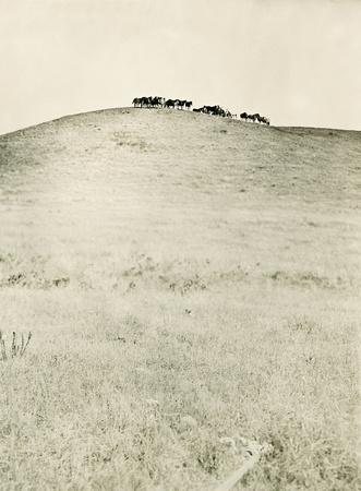 Nokota Wild Horses Linton North Dakota